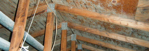 Moisture causing mold growth on roof rafters